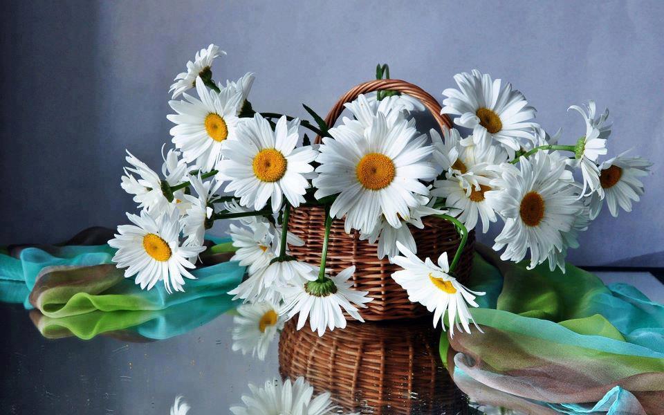 Картинки цветы ромашки букет 1