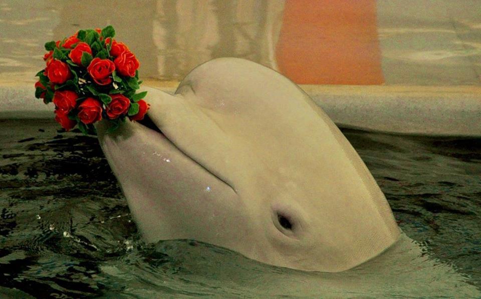 Красивые картинки животных и цветов 1